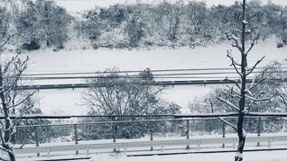 """""""白く覆って""""の写真・画像素材[4197752]"""