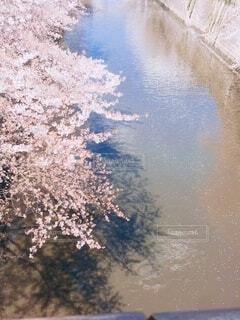 """""""空と桜""""の写真・画像素材[4208021]"""