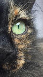 猫,動物,緑,目,見つめる,ドアップ