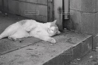 猫,動物,白,コンクリート,地面,住処,黒と白