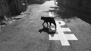 猫,動物,屋外,黒,道路,道,地面,通り,シャドウ,黒と白