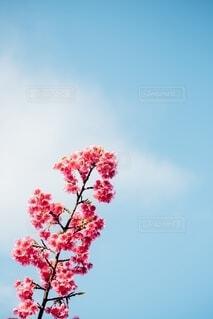空に咲くの写真・画像素材[4163611]