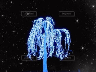 夜,動物,植物,イルミネーション,明るい