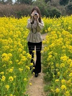 風景,花,屋外,黄色,菜の花,景色,草,樹木,菜の花畑,草木