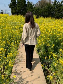 菜の花に囲まれてお散歩の写真・画像素材[4217758]