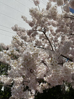 花,屋外,樹木,ブロッサム