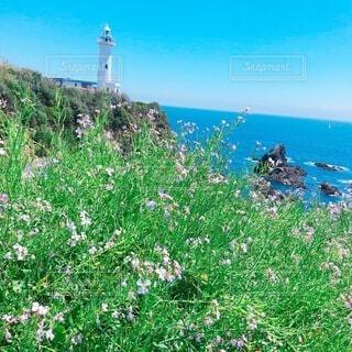 自然,海,空,花,屋外,ビーチ,青空,水面,草,丘,旅行,灯台,ジブリ風