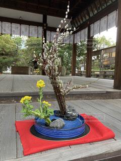 花,神社,散歩,植木鉢,観葉植物,草木,ガーデン
