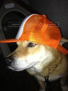 犬の写真・画像素材[23201]