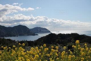 自然,風景,空,花,屋外,湖,ビーチ,雲,水面,山