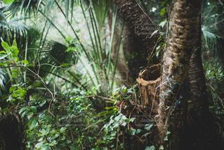 猫,公園,木,屋外,水面,樹木,ジャングル,草木,切株,熱帯雨林