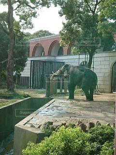 動物,屋外,緑,樹木,ゾウ,動物園