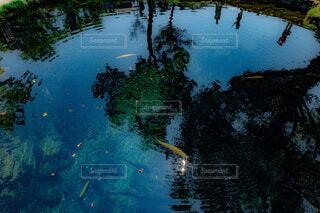 自然,魚,屋外,水面,池,反射,樹木,山梨,湧水