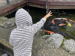 鯉に餌やりの写真・画像素材[4169727]