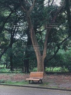 公園,秋,冬,屋外,ベンチ,樹木,地面,新宿,新宿御苑,草木