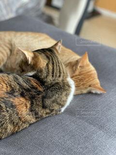 猫,動物,屋内,床,ニャンコ