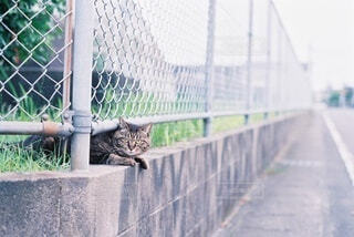 フェンスの隙間からこんにちは猫の写真・画像素材[4169048]