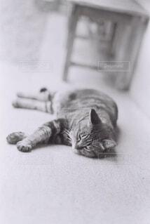 のんびりごろりん猫の写真・画像素材[4169049]