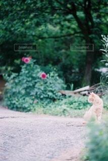 庭と猫の写真・画像素材[4169071]