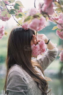 八重桜と。の写真・画像素材[4271284]