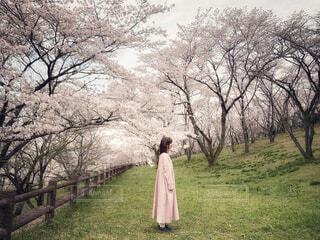 Springの写真・画像素材[4294930]