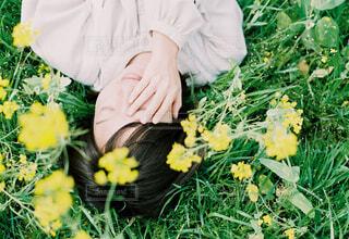 yellowの写真・画像素材[4296566]