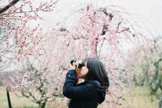 春がきたの写真・画像素材[4362319]