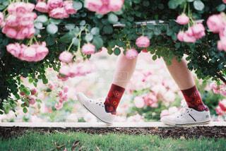 花園を歩くの写真・画像素材[4413251]