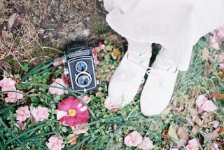 庭のクローズアップの写真・画像素材[4413531]