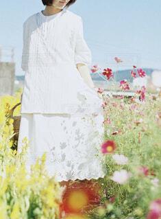 秋桜の写真・画像素材[4416012]