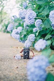 庭のクローズアップの写真・画像素材[4464089]