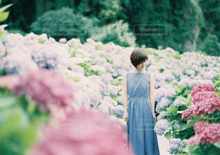 花園のクローズアップの写真・画像素材[4464090]