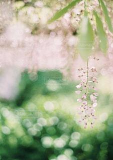 花のクローズアップの写真・画像素材[4544958]