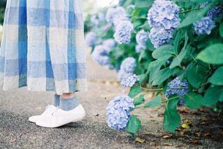 庭にぬいぐるみの写真・画像素材[4560708]