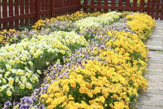 花壇に咲く花々の写真・画像素材[4362097]