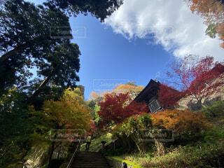 空,秋,屋外,樹木