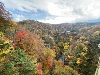 空,秋,屋外,山,樹木