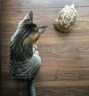 亀を見つめる子猫の写真・画像素材[4180804]