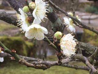 花,春,屋外,樹木,草木,ブルーム,支店,フローラ