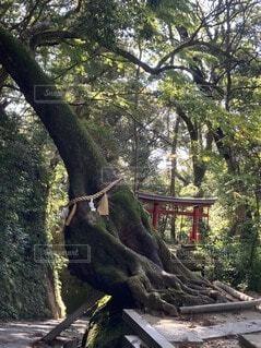森林,屋外,神社,樹木,ジャングル,草木
