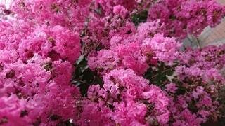花,春,ピンク,紫,草木,ガーデン,ブルーム,ブロッサム
