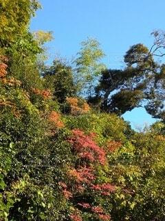 空,花,秋,紅葉,屋外,葉,樹木,草木