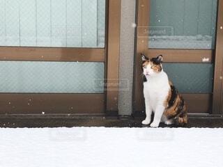 初めての雪。の写真・画像素材[4176575]