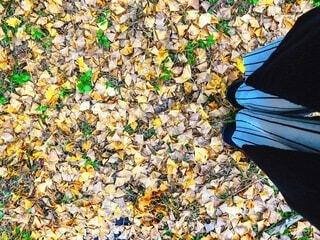 イチョウの絨毯の写真・画像素材[4192758]