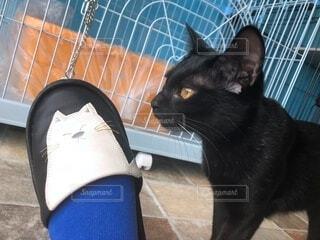 ネコのスリッパと黒猫ちゃんの写真・画像素材[4192757]
