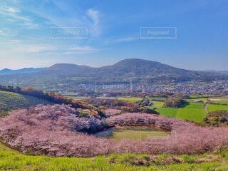 公園を囲む桜の写真・画像素材[4250094]