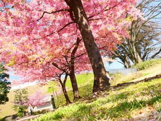 公園,花,秋,屋外,葉,草,樹木,草木