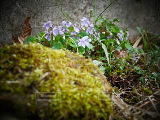 花,草木,菌,ガーデン,フローラ