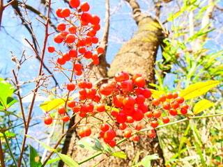 花,屋外,果物,樹木,ベリー