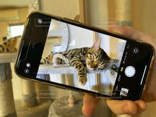 猫,動物,屋内,かわいい,昼寝,ねこ,のんびり,まったり,ネコ科,ネコ,おひるね,フォトインフォト